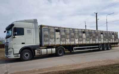 Перевозка животных и скота 8-965-920-08-80 - Ижевск, цены, предложения специалистов